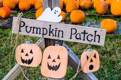 Halloween, Pumpkin Patch, Jack-o-lantern, Pumpkin