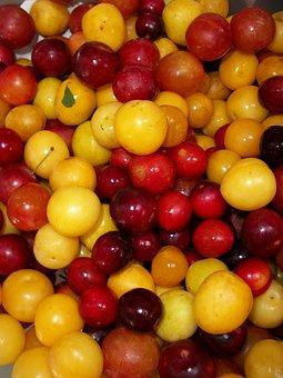 Summer Fruit, Cherries, Fruit, Summer, Ripe, Cherry