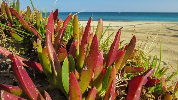 Plant, Ammophilous, Beach, Strong, Adaptation, Ecology