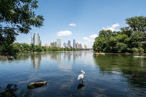 Austin, Texas, Lake, Ladybird, Town Lake, Swan, Kayak