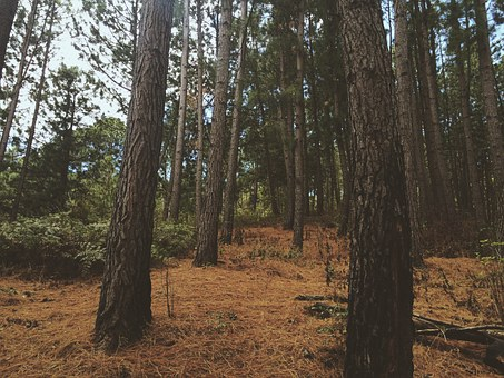 Forest, Leaves, Solo, Park, Autumn, Nature, Trees, Path