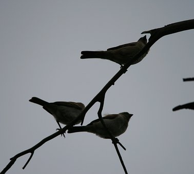 Birds, Small, Trio, Branch, Sky, Fly, Wings, Feather