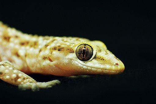 Eye, Lizard, Angelfish, The Universe, Cleft