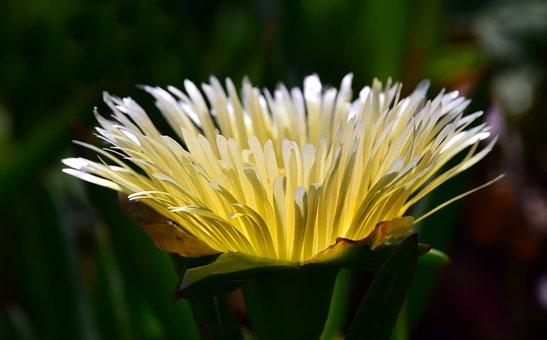 Cactus, Cactus Blossom, Close, Bloom, Plant, Nature