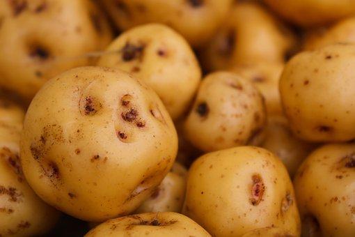 Papa Criolla, Potatoes, Vegetable, Food, Ecological