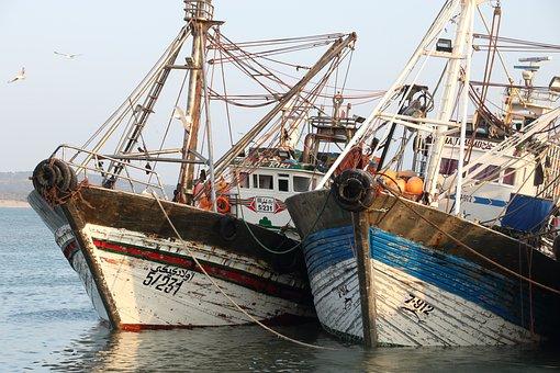 Morocco, Essaouira, Harbour, Fishing, Boat, Sea, Fish