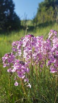 Flower, Open Air, Forest