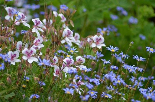 Flower Meadow, Purple, Pink, White, Flowers, Violet