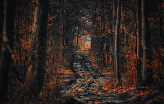 Forest, The Path, Way, Tree, Spacer, Foliage, Nature