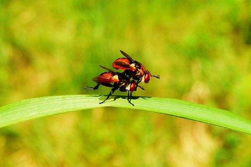 Animals, Invertebrates, Insects, Muchówki, Nature