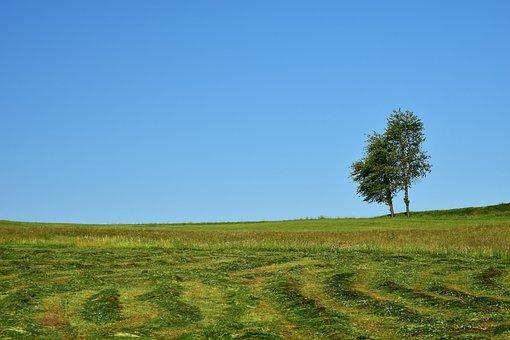 Meadow, Mowed, Nature, Green, Grass, Landscape, Summer