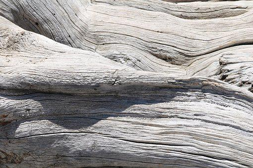 Tree, Tribe, Log, Wood, Thicker Stem, Sunshine, Like