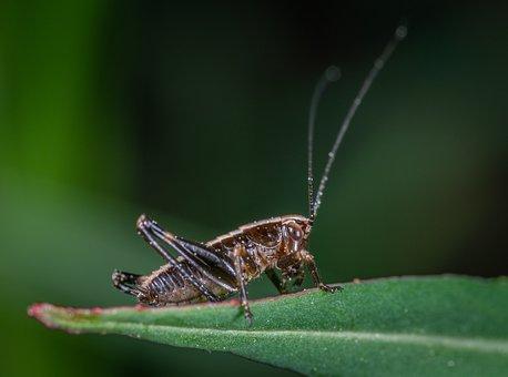 Insect, Grasshopper, Sheet, Macro, Bespozvonochnoe
