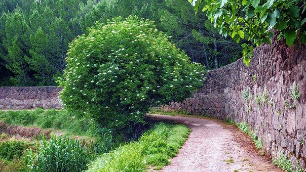 Nature, Landscape, Path, Spring, Rural, Tree