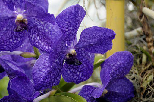 Orchid, Flower, Blossom, Botanical, Nature, Botany