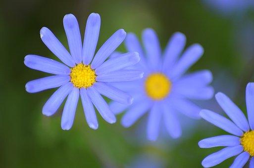 Flower, Nature, Blossom, Bloom, Plant, Close, Garden
