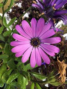 Purple, Leaves, Petals, Pretty, Green, Nature