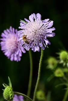 Blossom, Bloom, Purple, Purple Flower, Flower, Plant