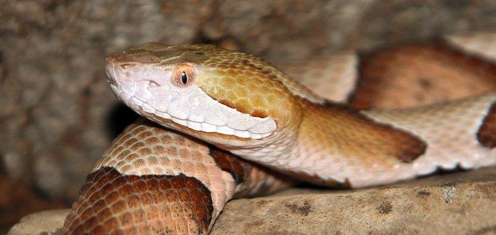 Snake, Reptile, Wildlife