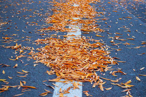 Road, Autumn, Fall, Leaves, Yellow, Red, Highway