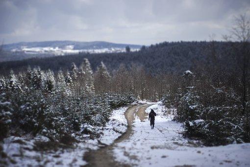 Jura, Fir, Snow, Nature, Landscape, Mountain