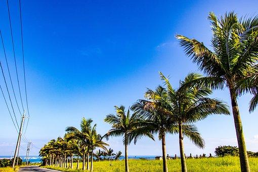 Palm Trees, Sky, Wood, Summer, Leaf, Blue, Plant