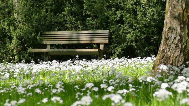 Park, Nature, Meadow, Spring, Flowers, Sun, Park Bench