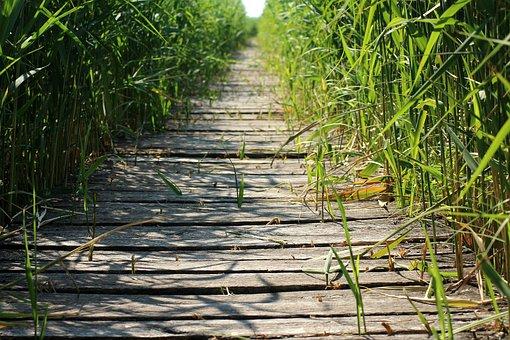 Footbridge, Bridge, Rushes, Vegetation, Wooden Bridge