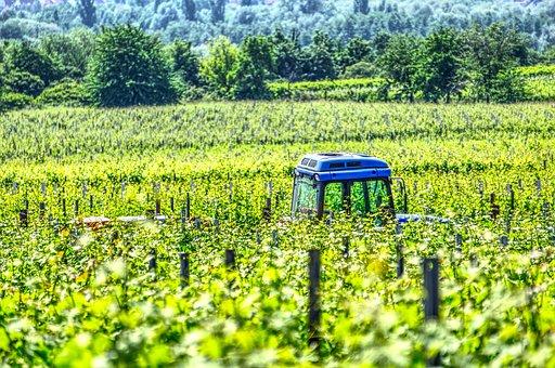 Tractor, Vineyard Tractor, Vineyard, Tractors