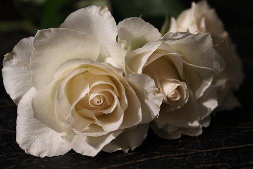 White Rose, Rose, Love, White Roses, White, Wedding