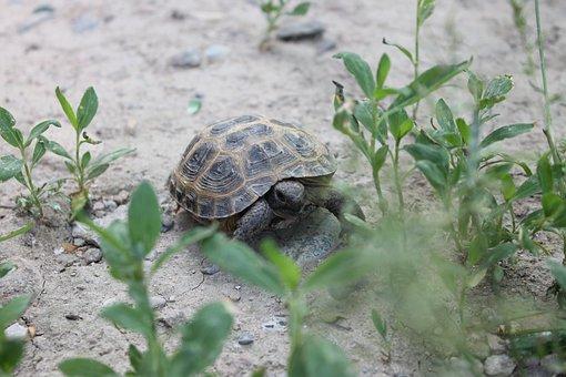 Krupnyj Plan, Tortoise, Reptiles, Zoo, Animals
