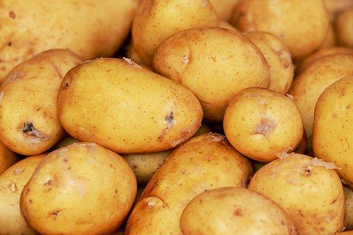 Potatoes, Erdfrucht, Harvest, Agriculture, Vegetables