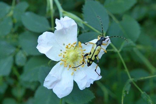 Animals, Invertebrates, Insect, The Beetle