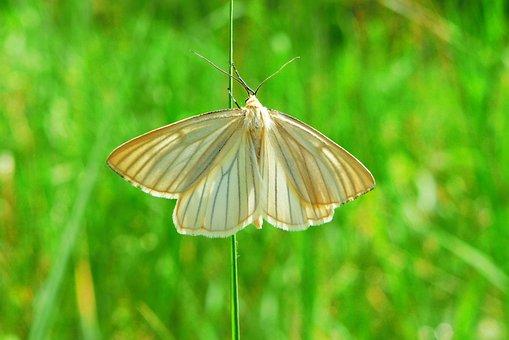 Animals, Invertebrates, Insect, Mols, Nature, A Moth