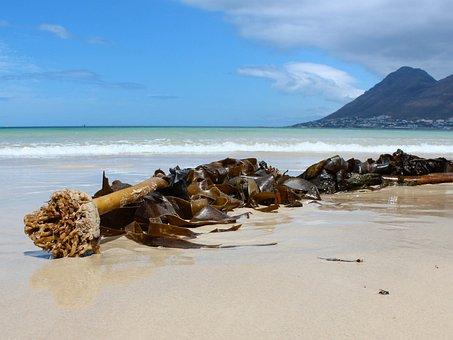South Africa, Beach, Ocean, Seaweed, Cape Of Good Hope
