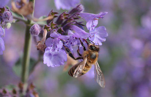 Bee, Blossom, Bloom, Insect, Flower, Close, Macro