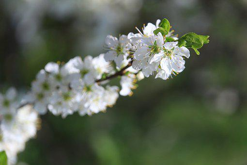 Blossom, Plants, Apple Tree, Spring, Colors, Green