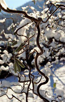 Snow, Ice, Branch, Winter, Cold, Frozen