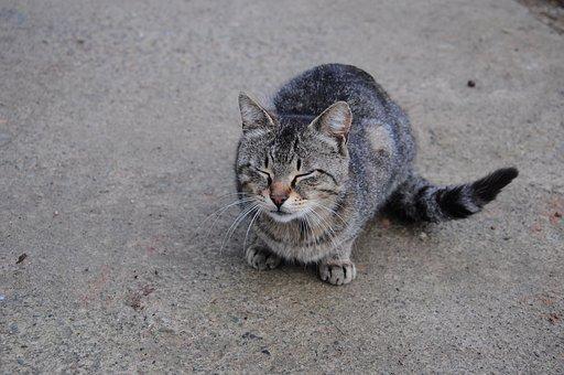 Cat, Cat Official, Cat Pictures, Cute Cat, Happy Cat