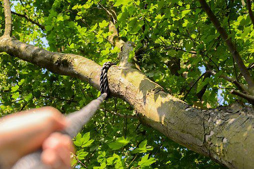 Climbing, Rope, Tree, Hand, Climb, Sport, Activity