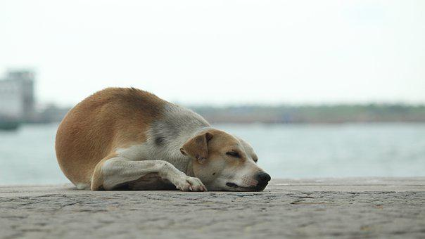 Dog, Sleep, Calm, Sea Side, Pet, Animal, Tired, Lying