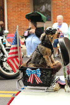 Dog, Parade, Patriotic, Motorcycle, Celebration, Pet