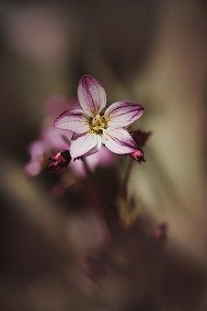 Flower, Blossom, Bloom, Pink, Pink Flower, Flora