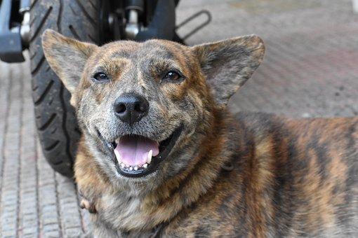 Dog, Pet, Animal, Canine, Domestic, Happy, Furry