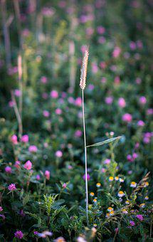 Blade Of Grass, Halm, Meadow, Grass, Grasses, Nature