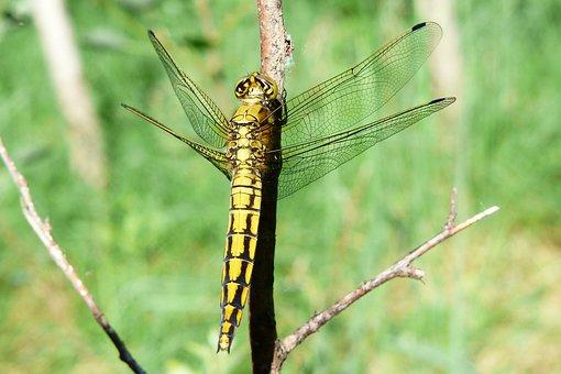 Animals, Invertebrates, Insect