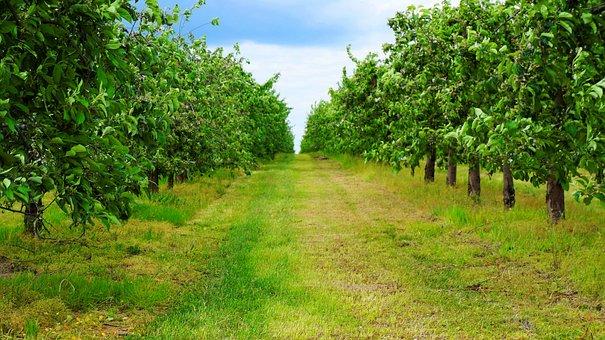 Sad, Landscape, Tree, Nature, Sprig, Garden, Orchard