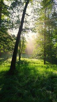 Forest, Morning, Light, Morgenstimmung, Fog, Sun
