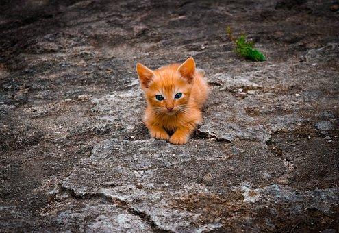 Cat, Feline, Cute, Lying, Nature, Animal, Kitten, Rest