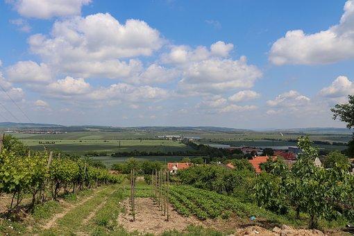 Macro, Moravia, Vineyard, Czech Republic, Czechia